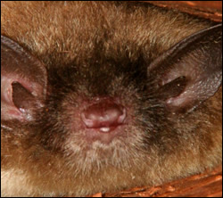 Englewood bat removal